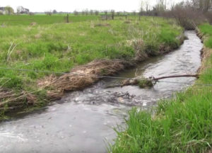 Riparian Buffer of Grass near a local stream