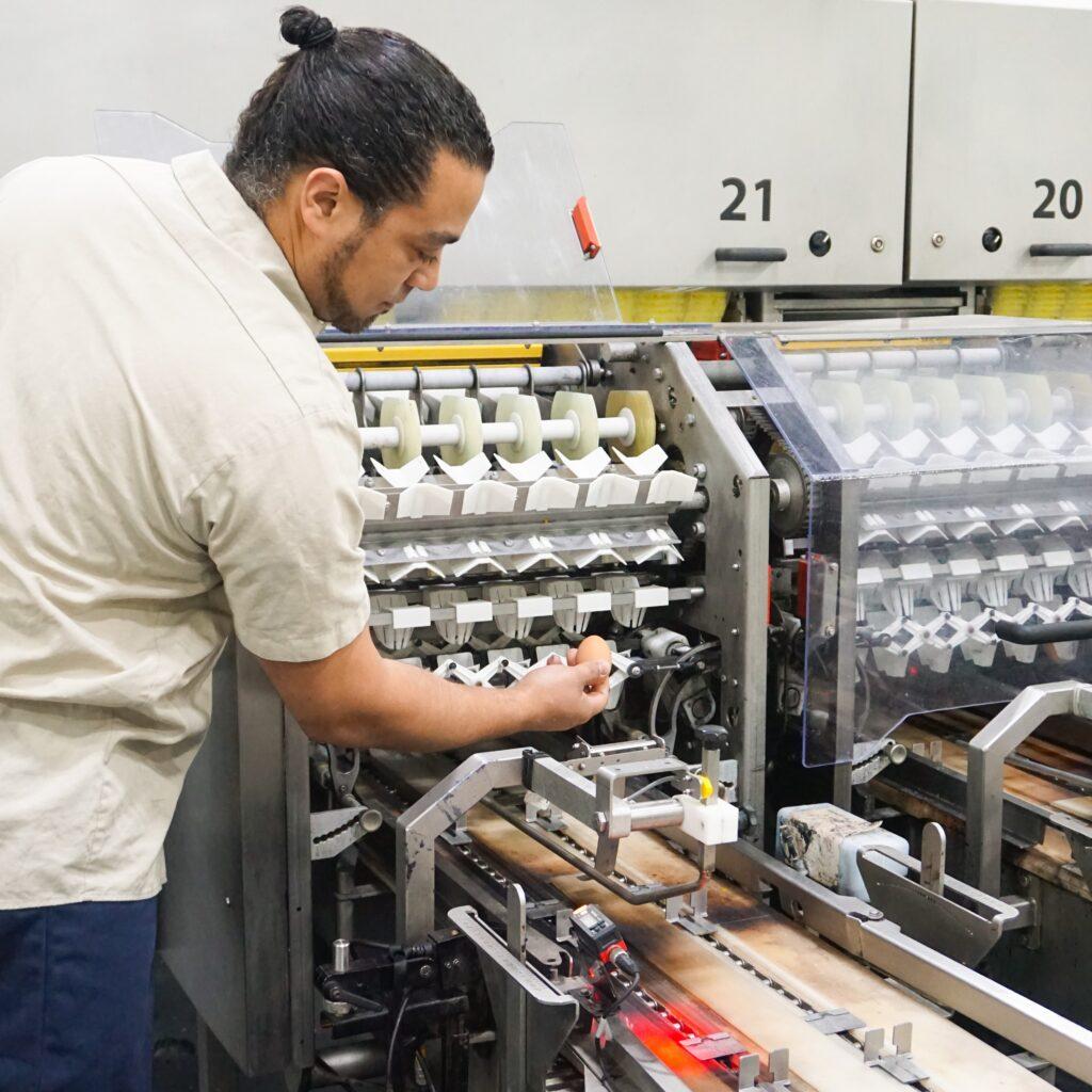 man checking egg processing equipment